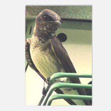 Purple Martin Postcards (Package of 8)