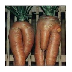 Carrot Adam and Eve Tile Coaster