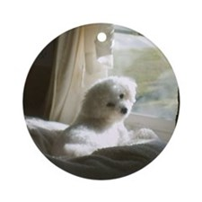 DAY DREAMING BICHON ORNAMENT (ROUND)