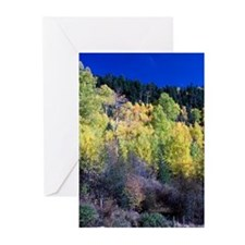Colorful Fall Greeting Cards (Pk of 10)