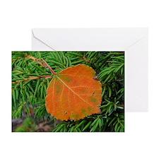 Aspen Leaf Greeting Cards (Pk of 10)