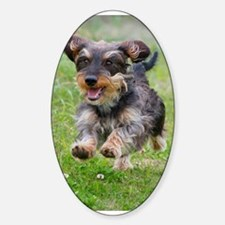 Black Wirehair Oval Decal