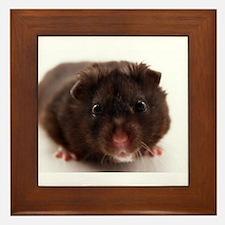 Unique Hamsters Framed Tile