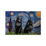 Starry / Schipperke Pair Rectangle Magnet (100 pac
