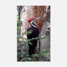 Pileated Woodpecker Rectangle Decal