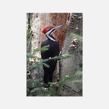 Pileated Woodpecker Rectangle Magnet