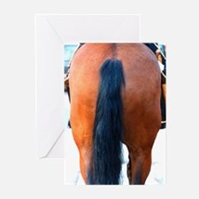 Horses'.... Greeting Cards (Pk of 10)