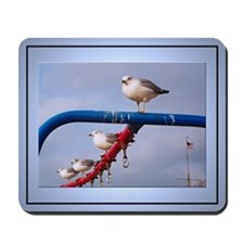 Cold Gulls Photo Mouse Pad