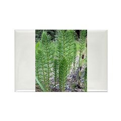 Horsetail Equisetum Rectangle Magnet (100 pack)