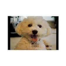 HAPPY BICHON PUPPY FACE RECTANGLE MAGNET
