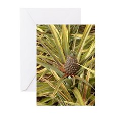 Pineapple in Paradise Greeting Cards (Pk of 20)