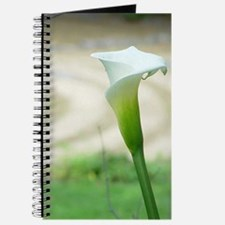 Journal - Calla Lily and Labyrinth