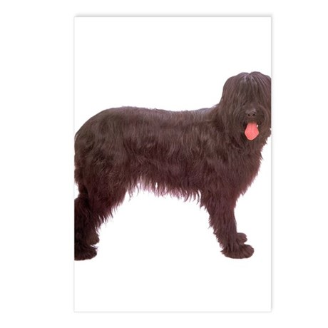 Briard Berger Dog Postcards (Package of 8)