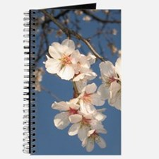 Almond Blossoms Journal 1
