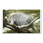 porcupine 2 Rectangle Sticker 50 pk)