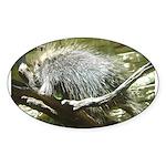 porcupine 2 Oval Sticker (10 pk)