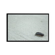 Roly Poly Rectangle Magnet