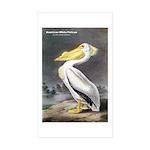 Audubon American White Pelican Rectangle Sticker