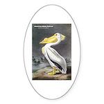 Audubon American White Pelican Sticker (Oval 10 pk
