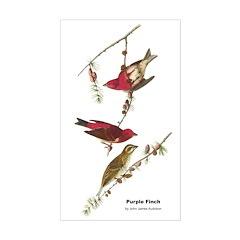 Audubon Purple Finch Birds Rectangle Decal