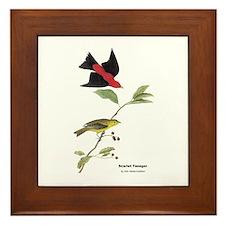 Audubon Scarlet Tanager Birds Framed Tile