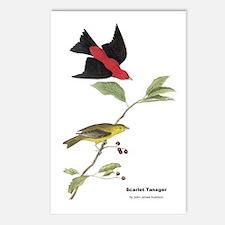 Audubon Scarlet Tanager Birds Postcards (Package o
