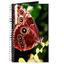 Common Morpho Journal