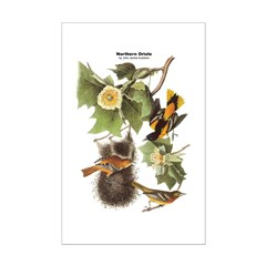 Audubon Northern Oriole Birds Posters