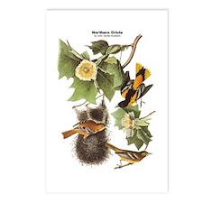 Audubon Northern Oriole Birds Postcards (Package o
