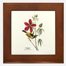 Audubon Troupial Birds Framed Tile