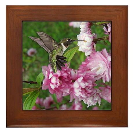 Male Hummingbird Framed Tile