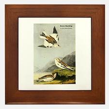 Audubon Snow Bunting Bird Framed Tile