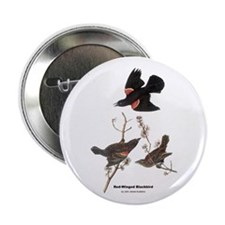 "Audubon Red-Winged Blackbird 2.25"" Button"