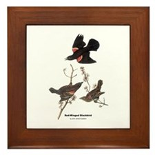 Audubon Red-Winged Blackbird Framed Tile