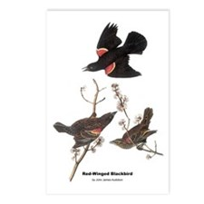 Audubon Red-Winged Blackbird Postcards (Package of