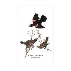 Audubon Red-Winged Blackbird Rectangle Sticker 10