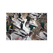 Winter Ducks Rectangle Magnet