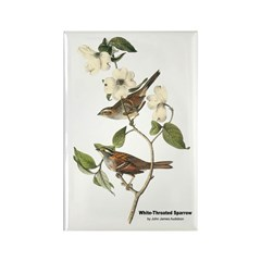 Audubon White-Throated Sparrow Rectangle Magnet (1