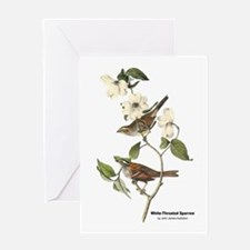 Audubon White-Throated Sparrow Greeting Card