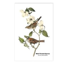 Audubon White-Throated Sparrow Postcards (Package