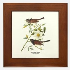 Audubon Dark-Eyed Junco Bird Framed Tile