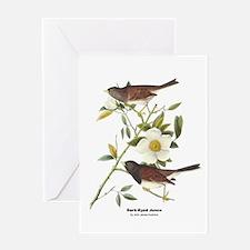 Audubon Dark-Eyed Junco Bird Greeting Card