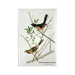 Audubon Towhee Bird Rectangle Magnet (10 pack)
