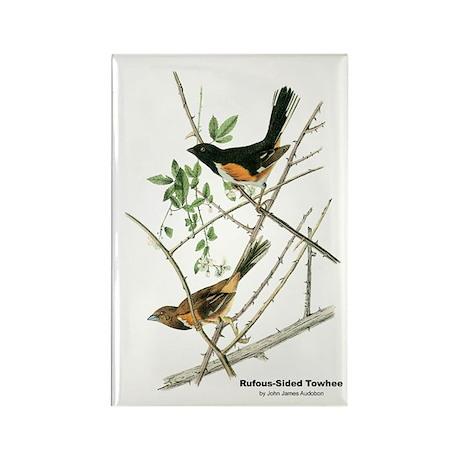 Audubon Towhee Bird Rectangle Magnet