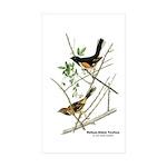 Audubon Towhee Bird Rectangle Sticker 10 pk)