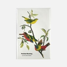 Audubon Painted Bunting Bird Rectangle Magnet