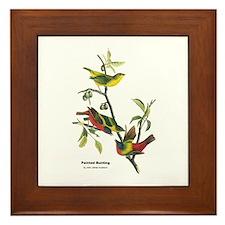 Audubon Painted Bunting Bird Framed Tile
