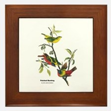 Audubon Painted Bunting Bird Framed Tile