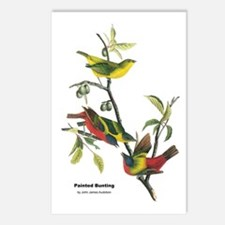 Audubon Painted Bunting Bird Postcards (Package of