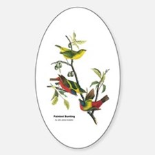 Audubon Painted Bunting Bird Oval Decal